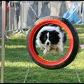 Concours Agility 17/04/11