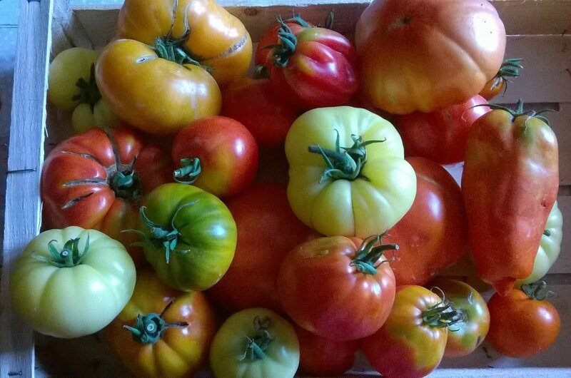 Cagette tomates