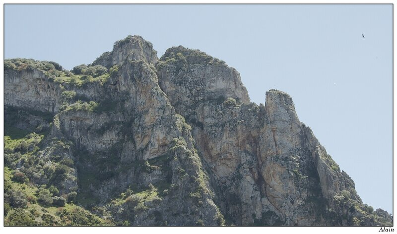 périple ornithologique en andalousie