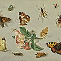 Jan van kessel the elder, butterflies, moths, a dragonfly and other insects, with a spring of apple blossom