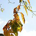 Feuilles d'automne 3