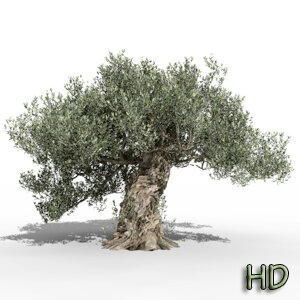 Olea europaea olive tree 3D tree plant model TPF The Plant Factory Icon