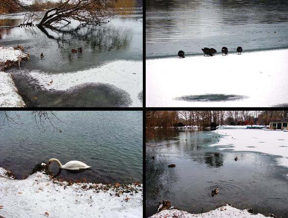 parc_tete_d_or_neige