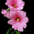 Couleurs de fleurs (37)