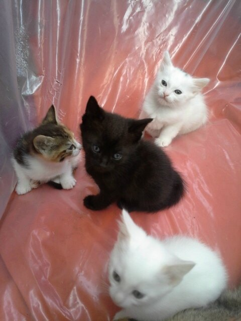 NOS CHATONS