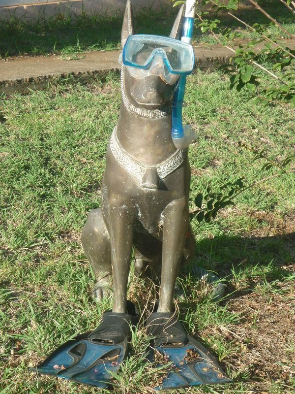 Dr le de nain de jardin dans notre quartier pignon sur mer - Nain de jardin amelie poulain ...