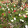 fleurs-ville_3