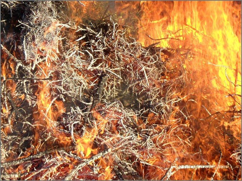 LC feu branchages 122015 2
