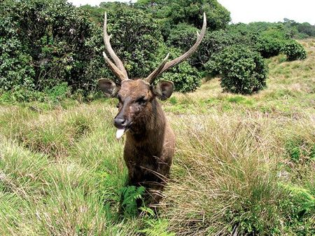 horton plains d