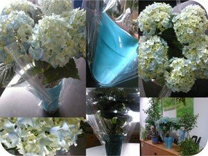 Mr_Hortensia
