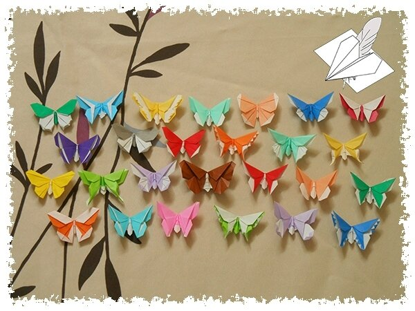 Papillon 013 blog