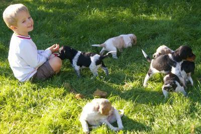 2007 09 meo et bb chiens