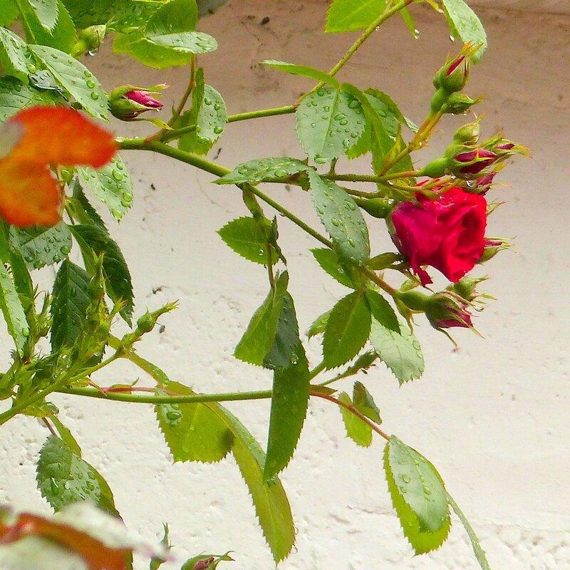 a les fleurs roses2