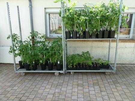 24-les petits plants dehors (4)