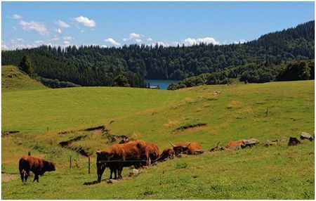 Fontaneix_lac_vaches