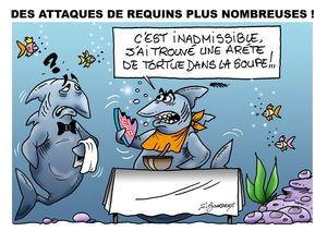 requin web