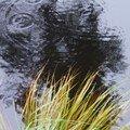 Glaswaldsee - pluie
