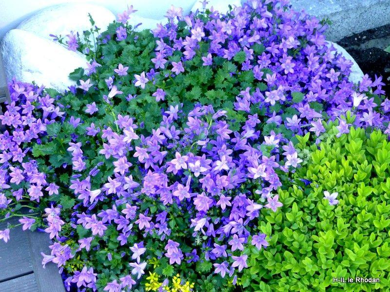 15-Fleurs 2013-06-06 (15)