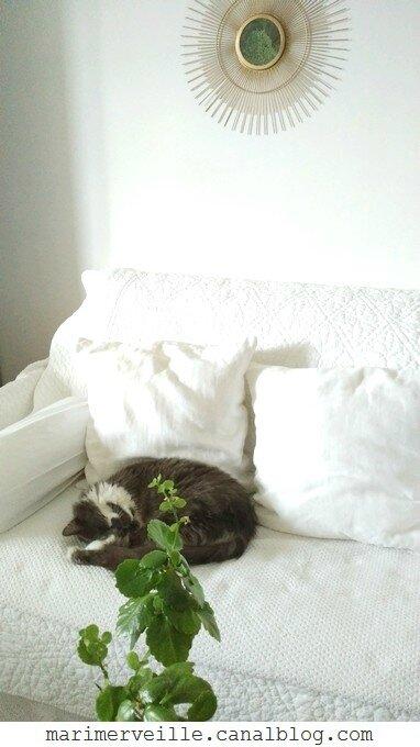 cocooning du chat - marimerveille