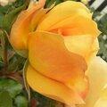 fleurs-roses-2 (6)