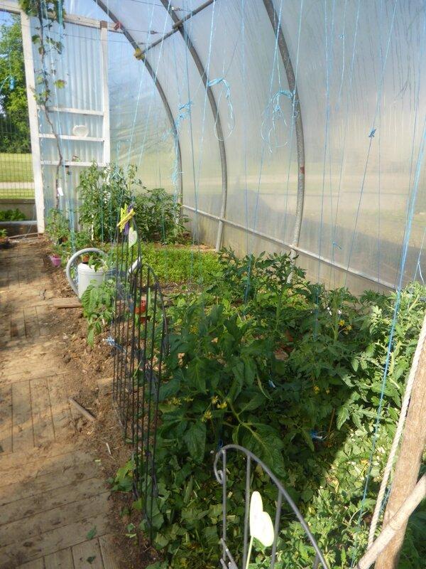 19-tomates-serre (1)
