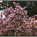 Tulipier 200315