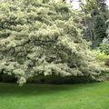 Sublime ecosse - inverewe garden (2)