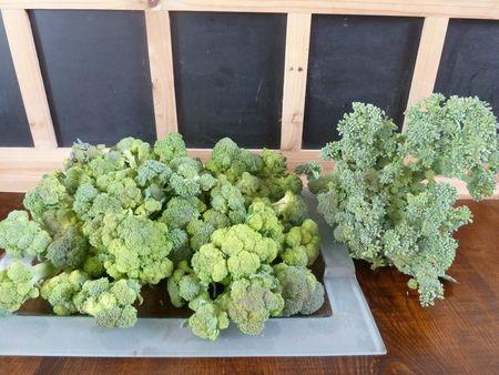 19-brocolis du jour (2)