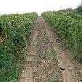 Rhône Nord-2 2006 048