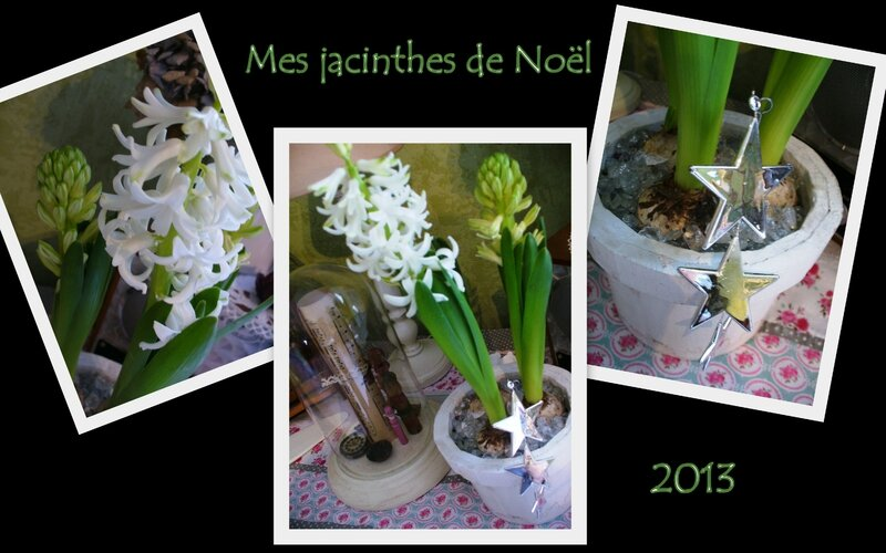 Jacinthes 2013_2