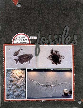 09_09_19_les_fossiles