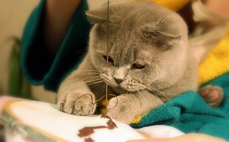 cat-sewing-embroidery-funny-kitty-animals_large