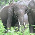Bébé éléphant dans la réserve