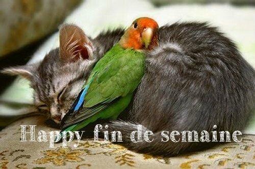 HappyFinDe Semaine