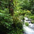 Stream in La Selva