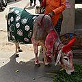 Inde - Nos amies les bêtes