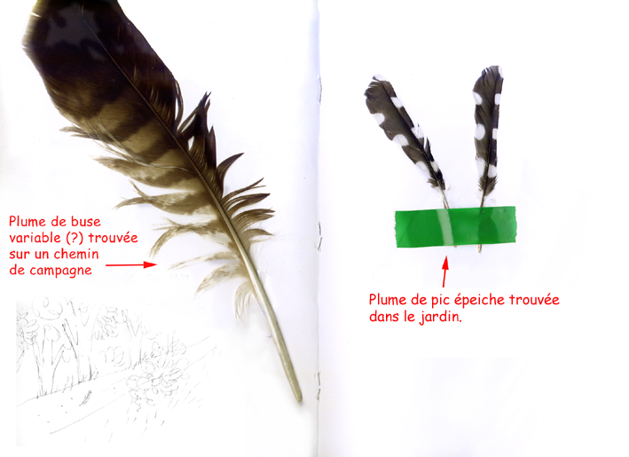 plumes_2