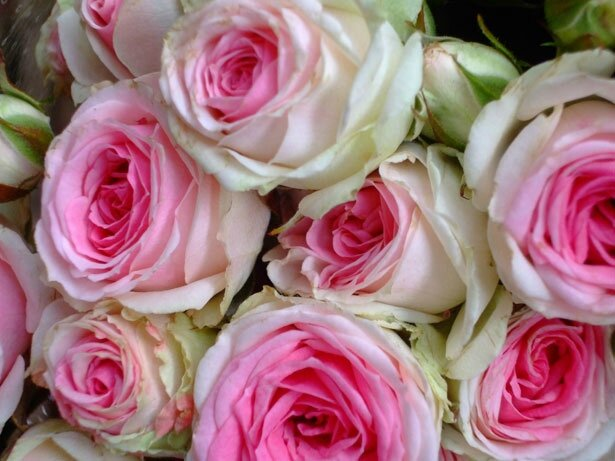 pink-rose-bouquet