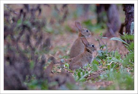 plaine lulu lapins double soir 180611