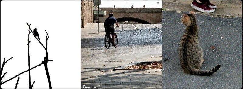 Saint Martin d'Auxigny-Montpellier-La Châtre