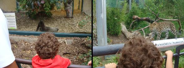 PetitBilou_zoo