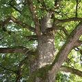 Chêne totem - holzplaz - septembre 2008