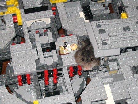 LegoOasis12
