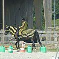 Jeux équestres manchots 2013 (207)