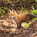 2014-05-30 LUX-1141