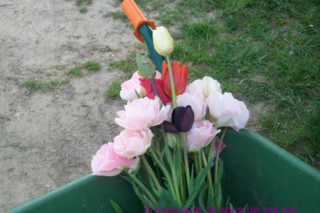 tulipes_bouquet