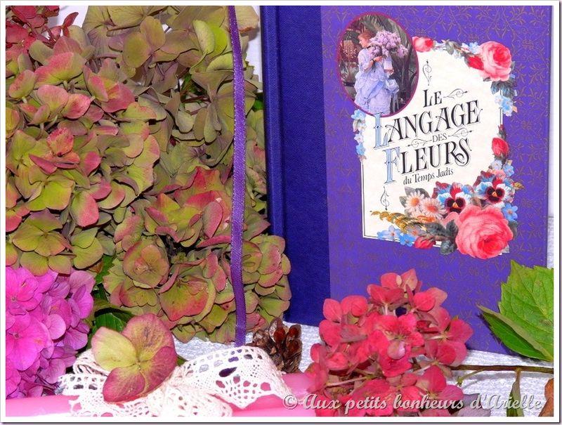 Hortensias aux couleurs de l'automne (9)