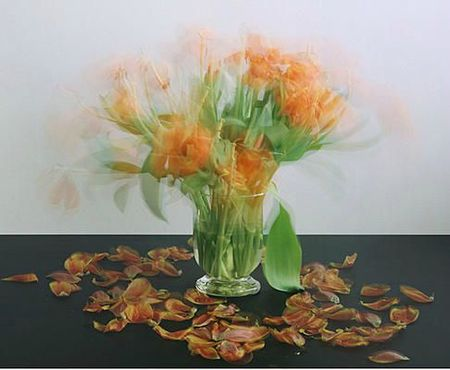 Michael Wesely-flowers