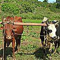 MADAGASCAR : DIEGO-SUAREZ