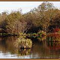 Buissons roux et reflets au Lac